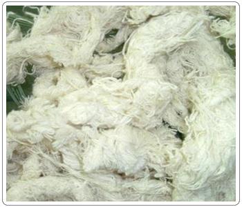 hosiery cotton